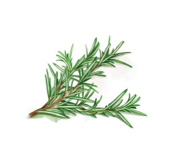 Rosmarin Olivenöle
