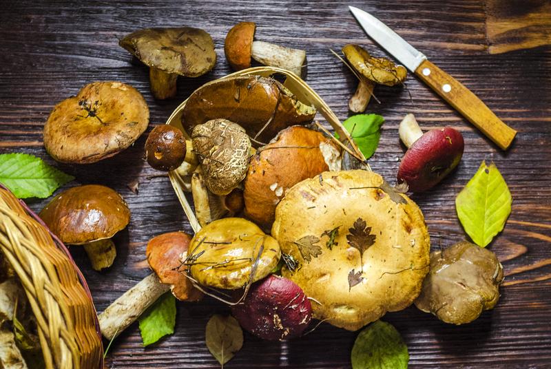 Wie man mit Pilzen kocht