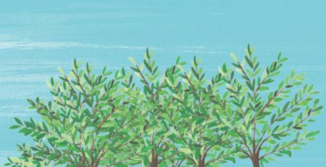 Die Welt Baum für Baum aufforsten